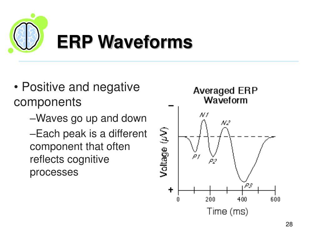 ERP Waveforms