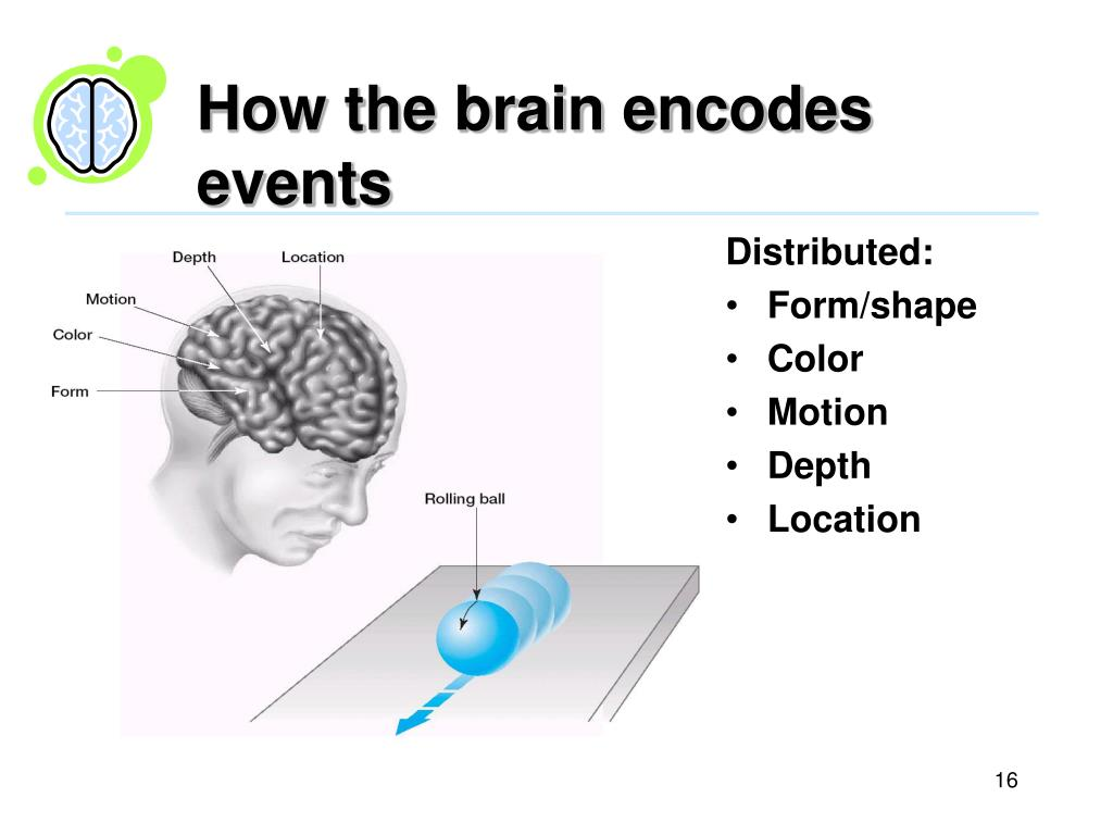 How the brain encodes events
