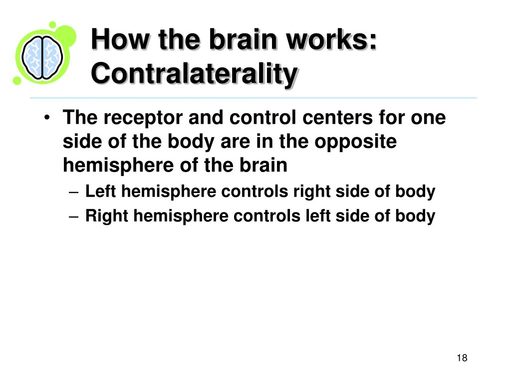 How the brain works: Contralaterality