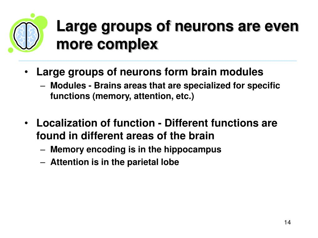 Large groups of neurons are even more complex