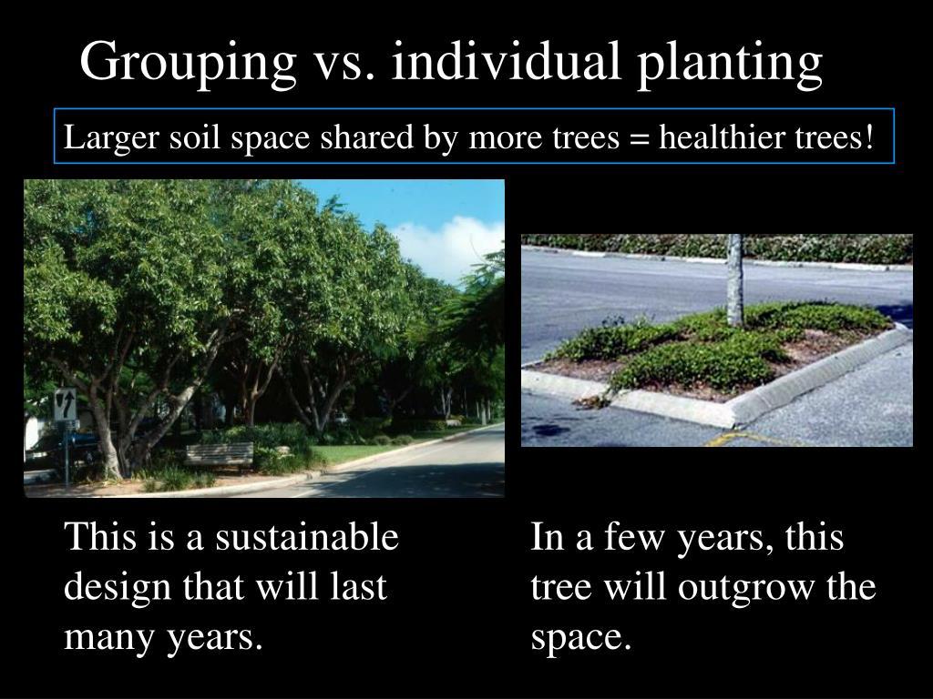 Grouping vs. individual planting