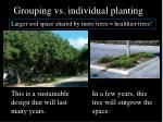 grouping vs individual planting