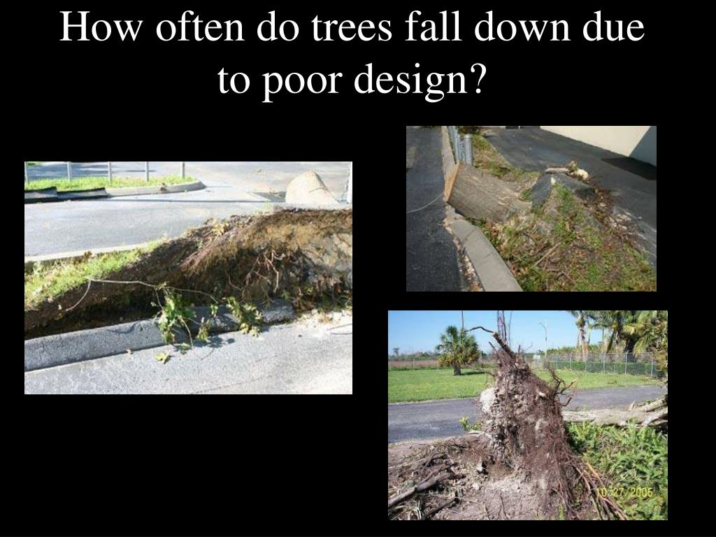 How often do trees fall down due to poor design?
