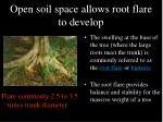 open soil space allows root flare to develop