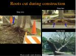 roots cut during construction