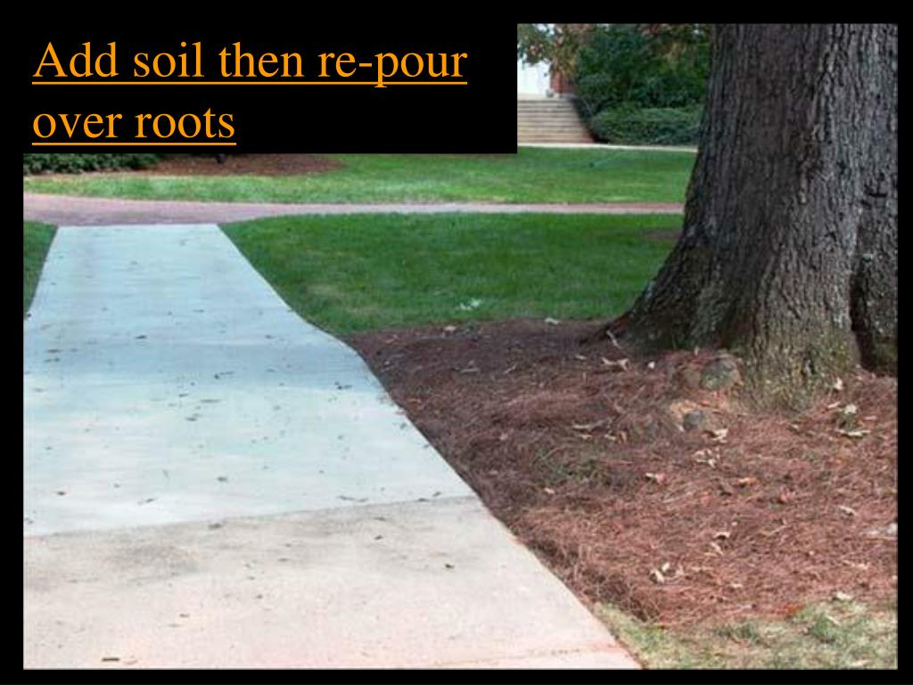 Add soil then re-pour over roots
