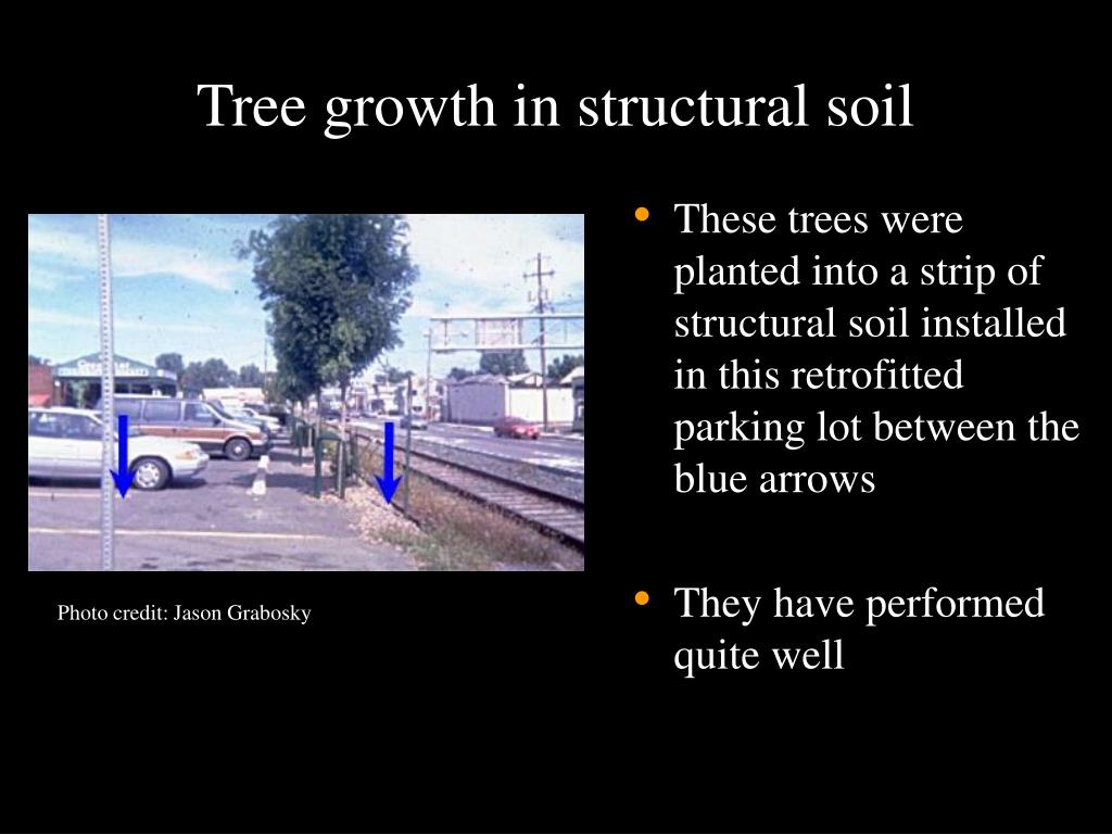 Tree growth in structural soil