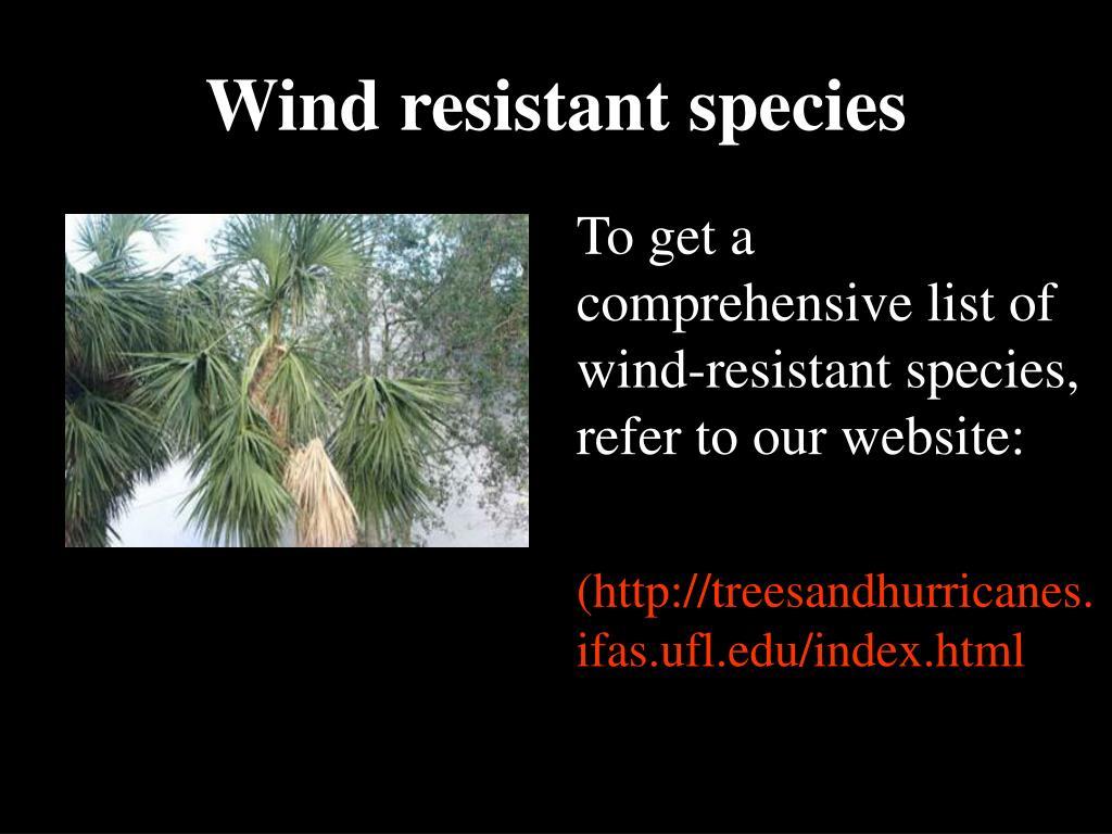 Wind resistant species