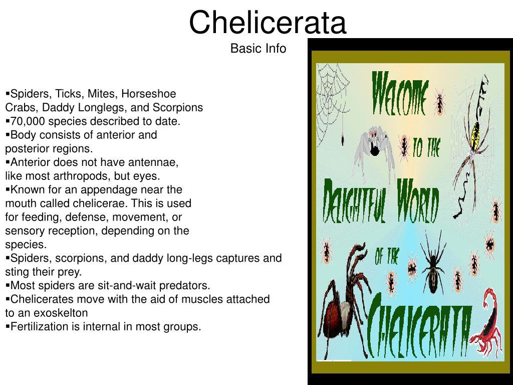 Chelicerata