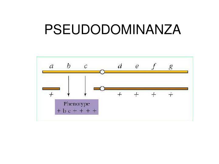PSEUDODOMINANZA