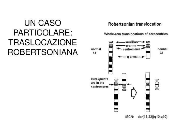 UN CASO PARTICOLARE: TRASLOCAZIONE ROBERTSONIANA