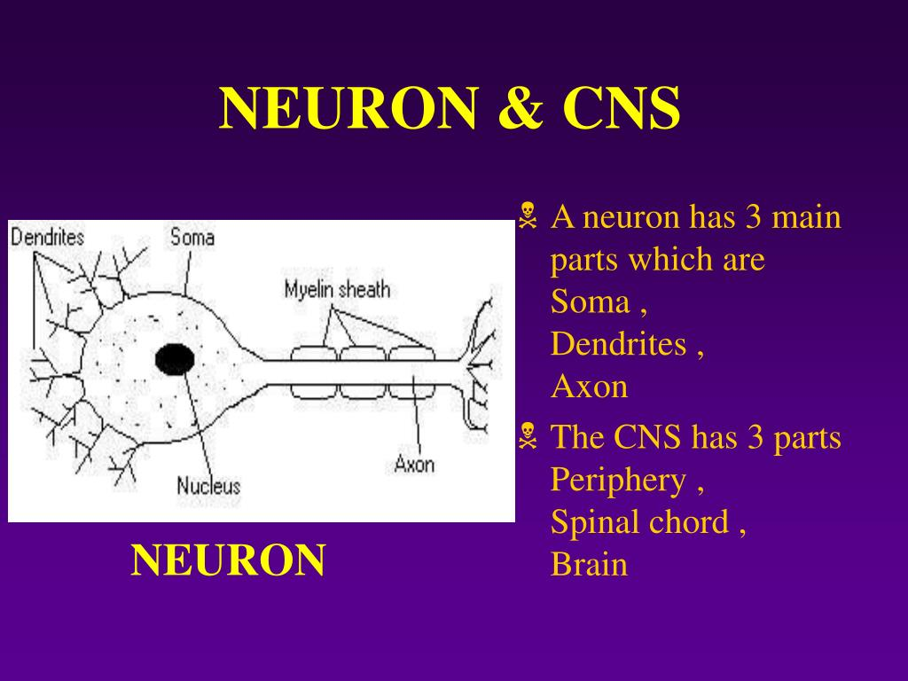 NEURON & CNS