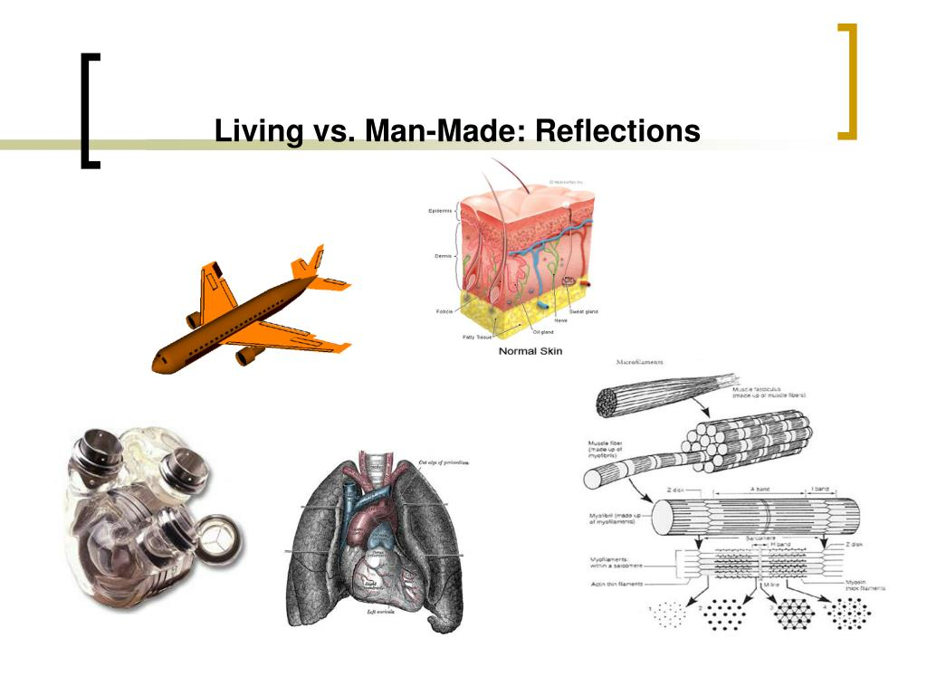 Living vs. Man-Made: Reflections