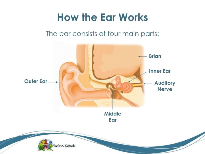 How the ear works