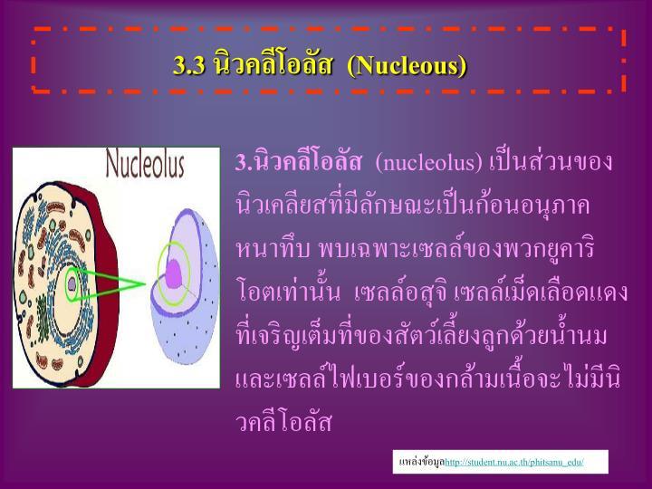 3.3 นิวคลีโอลัส  (