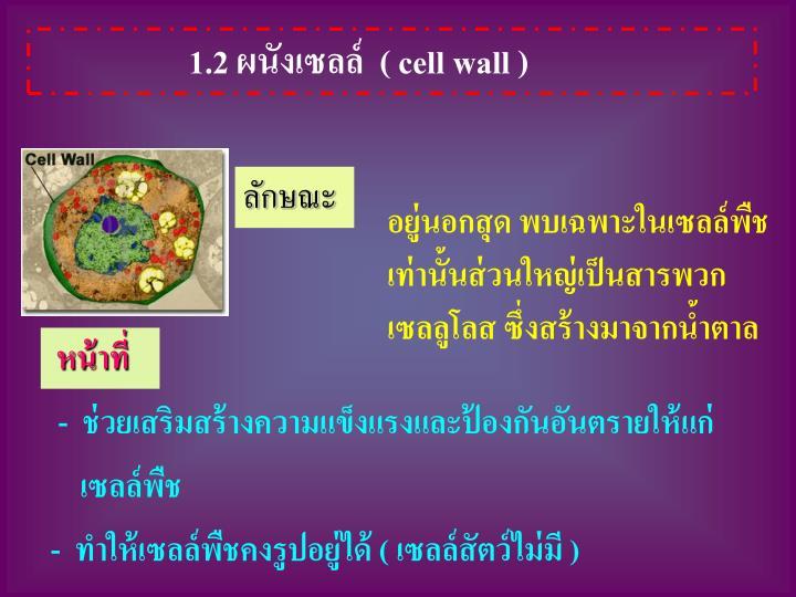 1.2 ผนังเซลล์  ( cell