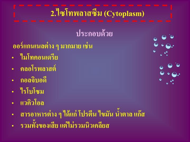 2.ไซโทพลาสซึม (