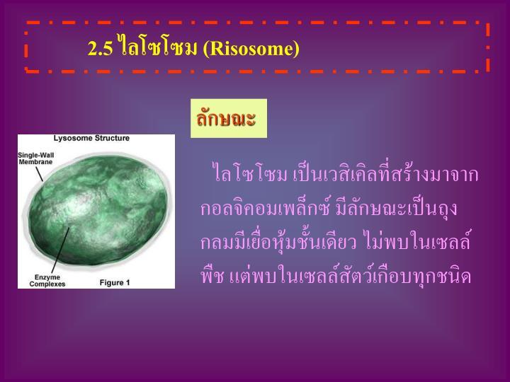 2.5 ไลโซโซม (