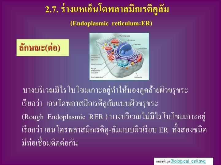 2.7. ร่างแหเอ็นโดพลาสมิกเรติคูลัม