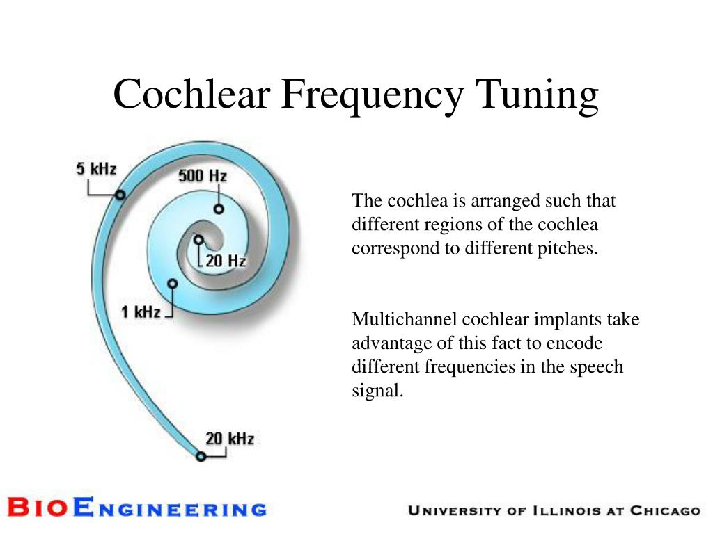 Cochlear Frequency Tuning