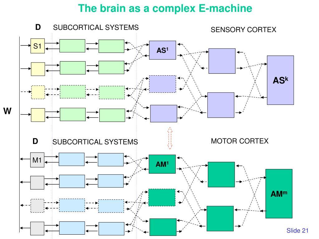 The brain as a complex E-machine