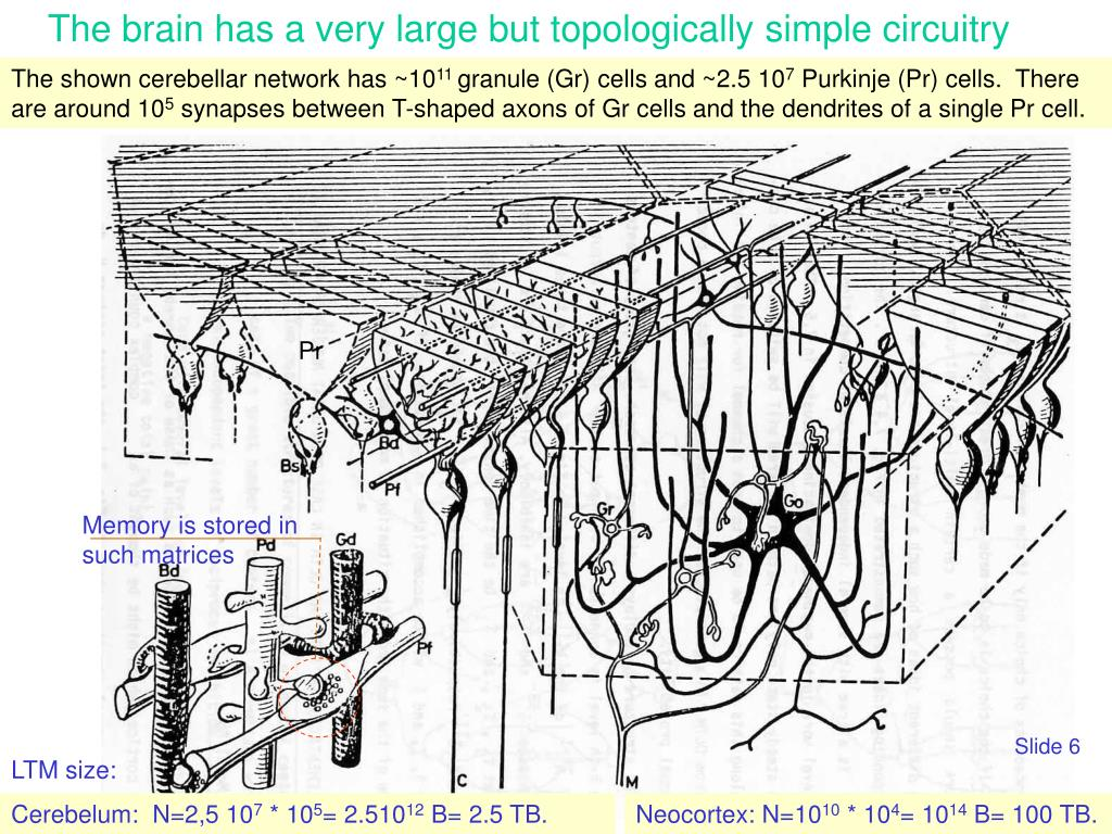 The brain has a very large but topologically simple circuitry