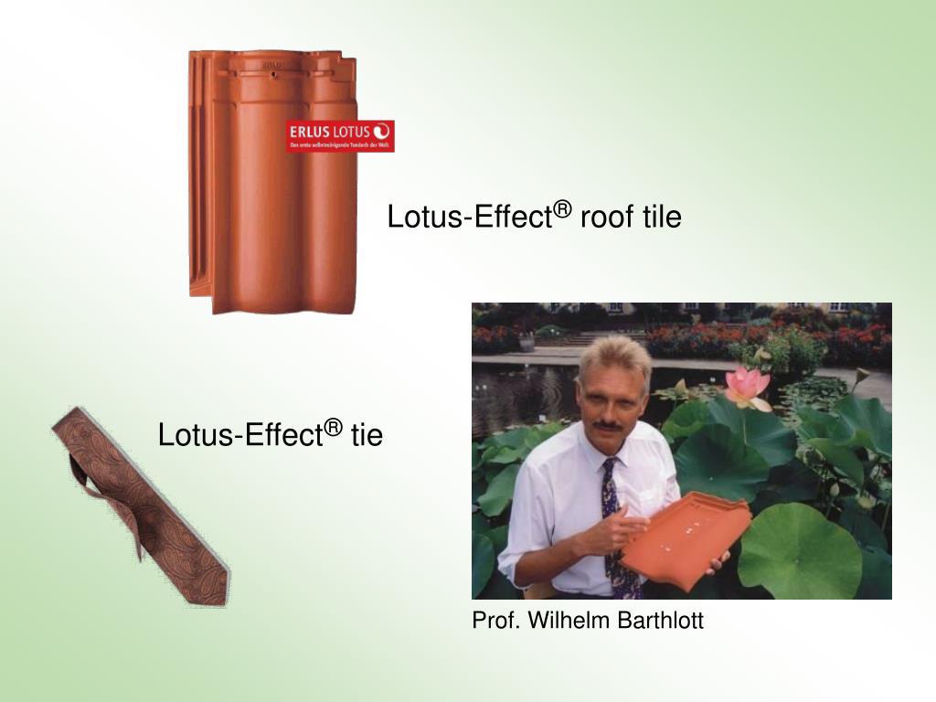 Lotus-Effect