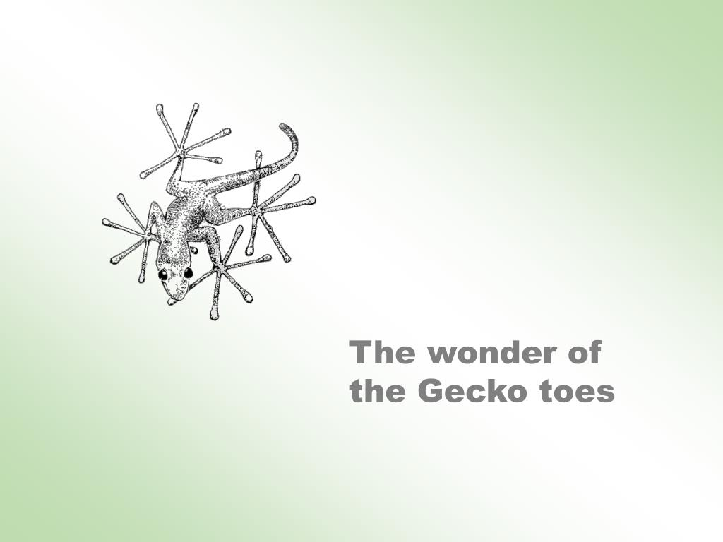 The wonder of the Gecko toes