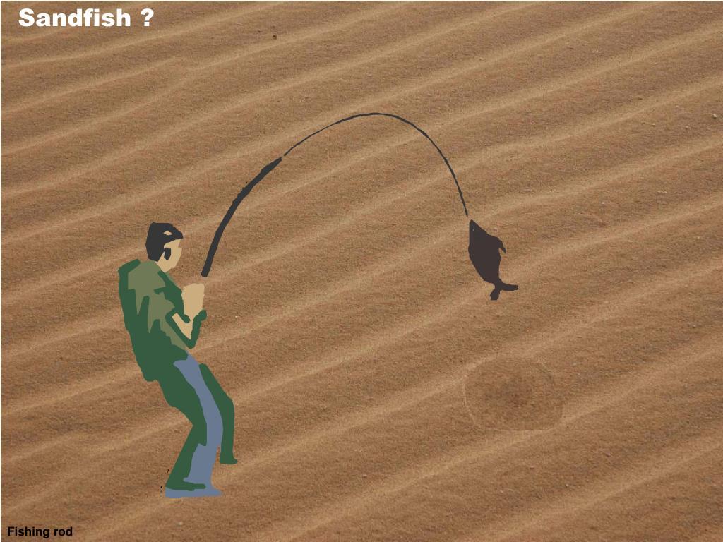 Sandfish ?