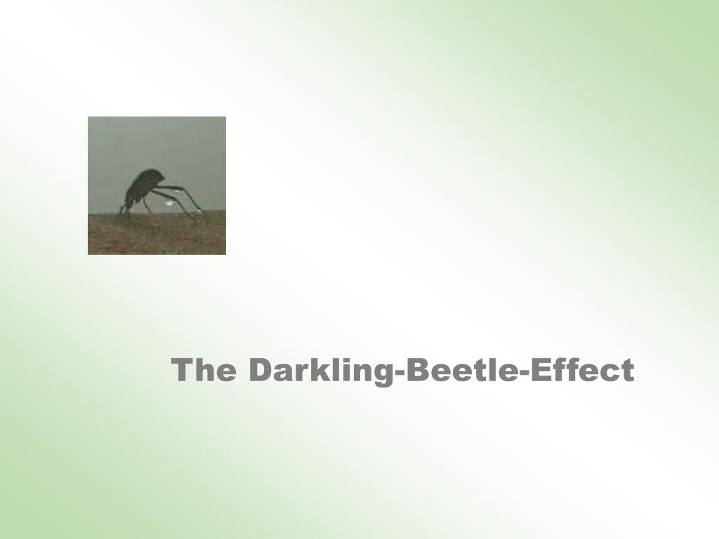 The Darkling-Beetle-Effect