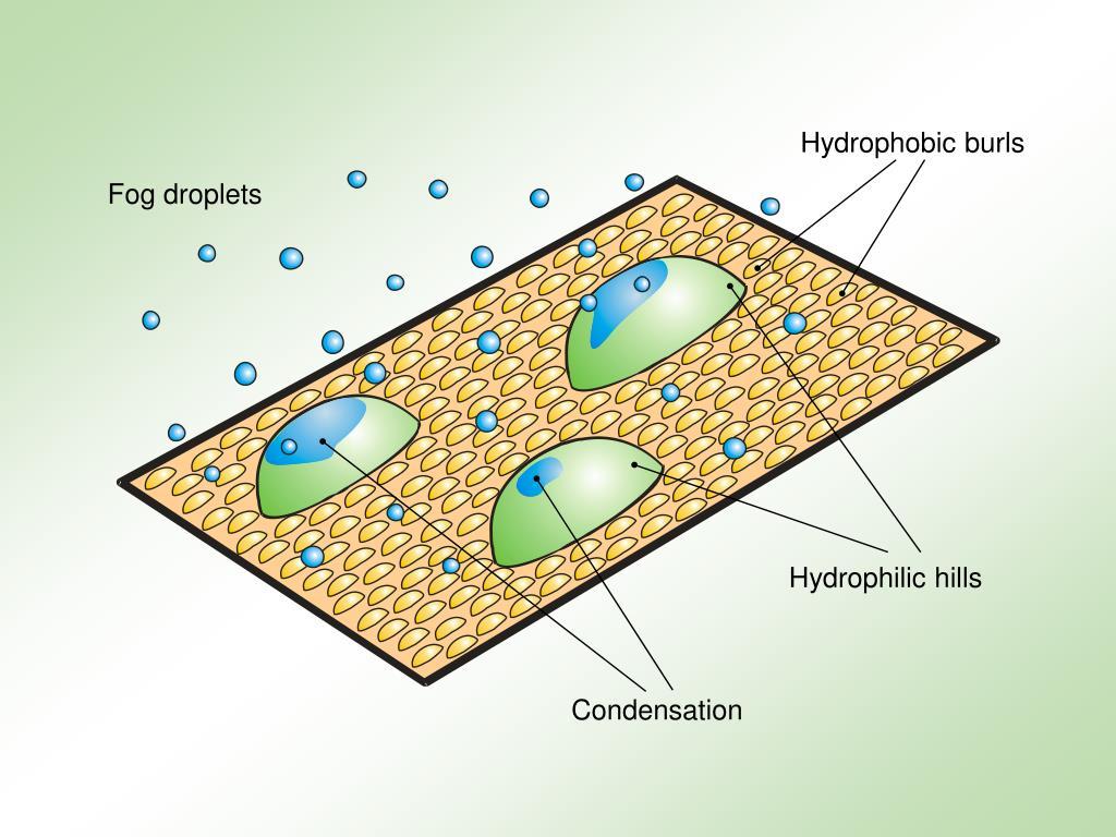 Hydrophobic burls