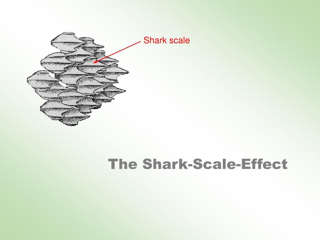 Shark scale