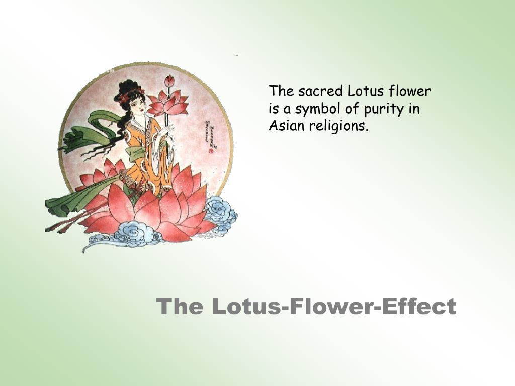 The sacred Lotus flower is a symbol of purity in Asian religions.