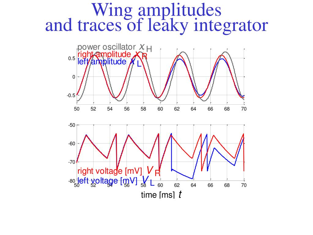 Wing amplitudes