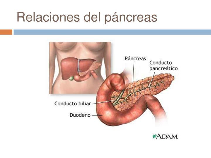 Relaciones del páncreas