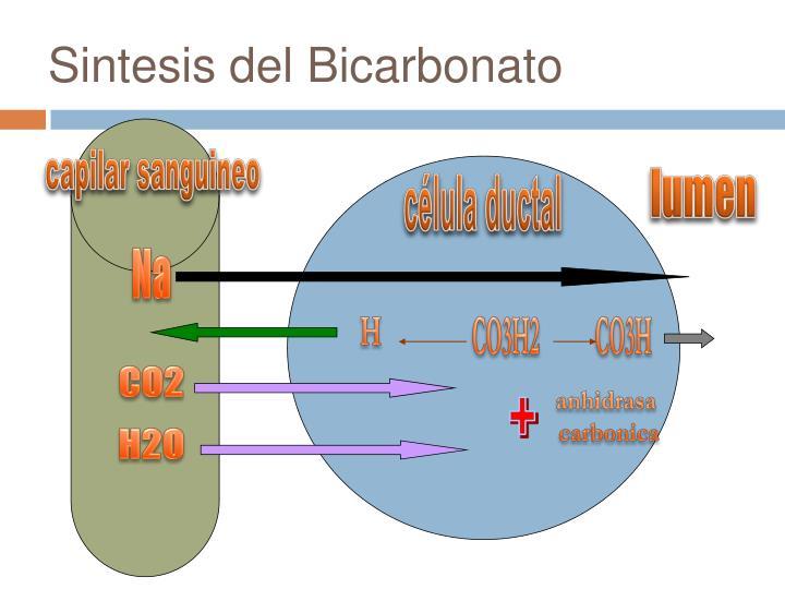 Sintesis del Bicarbonato