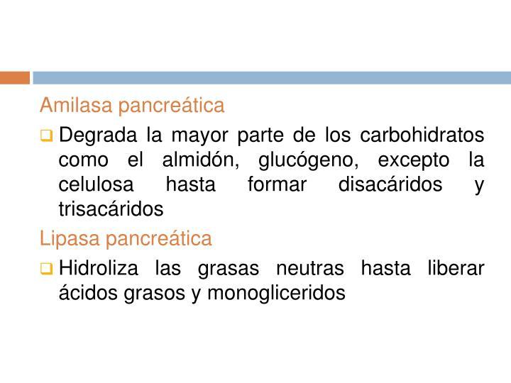 Amilasa pancreática