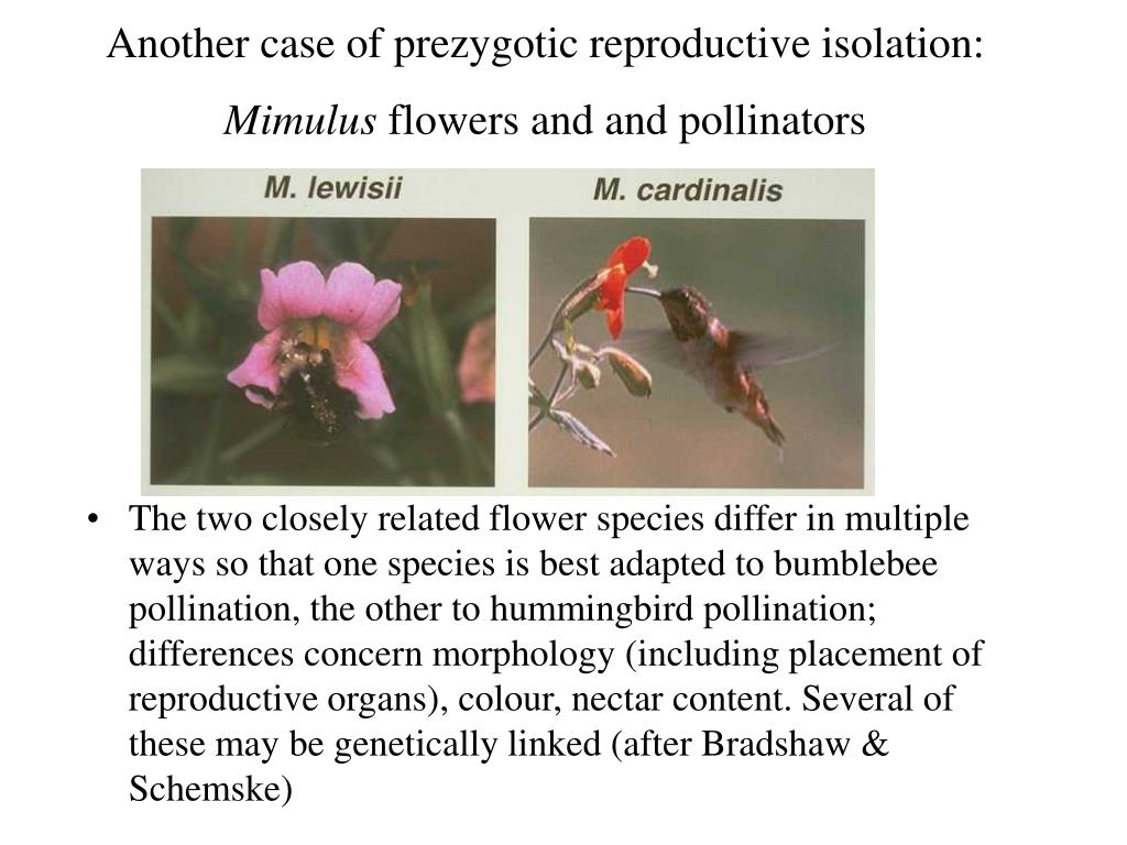 Another case of prezygotic reproductive isolation: