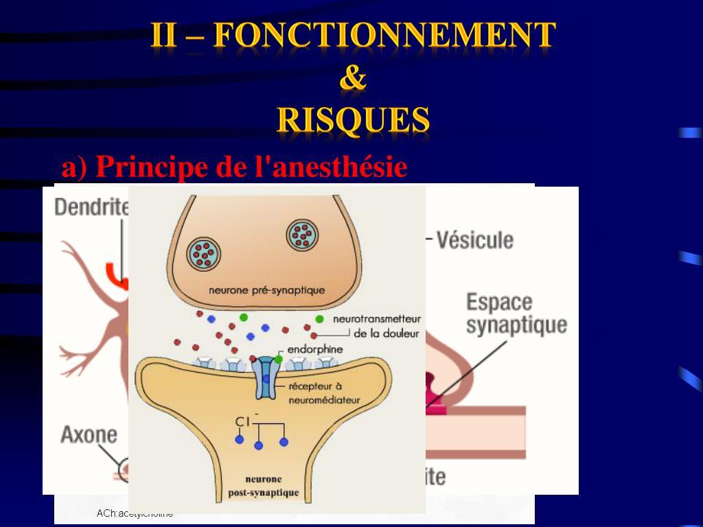 II – Fonctionnement