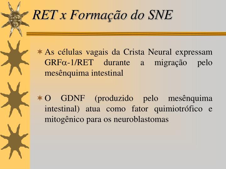 RET x Formação do SNE