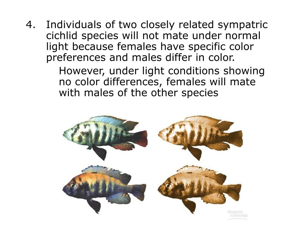 Individuals of two closely related sympatric cichlid species will not mate under normal light because females have specific color preferences and males differ in color.