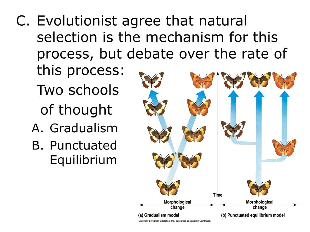 Evolutionist agree that natural selection is the mechanism for this process, but debate over the rate of this process: