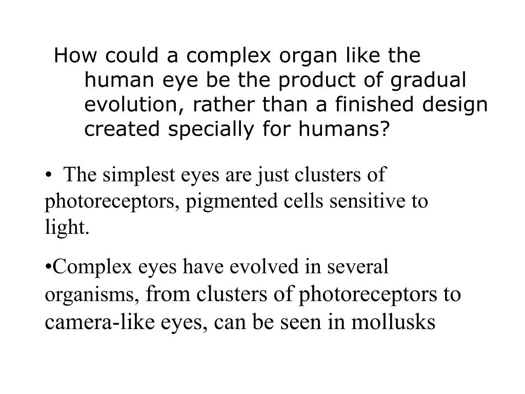How could a complex organ like the human eye be the product of gradual evolution, rather than a finished design created specially for humans?