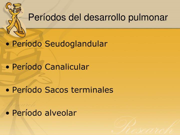 Períodos del desarrollo pulmonar