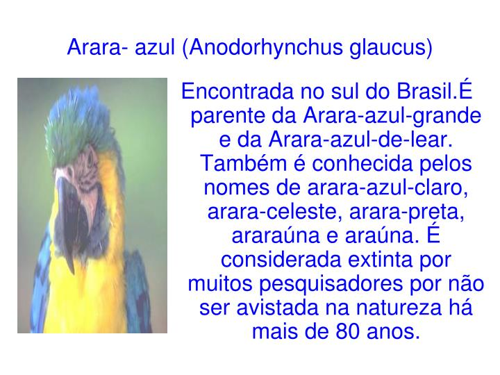 Arara- azul (Anodorhynchus glaucus)