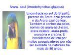 arara azul anodorhynchus glaucus