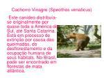cachorro vinagre speothos venaticus