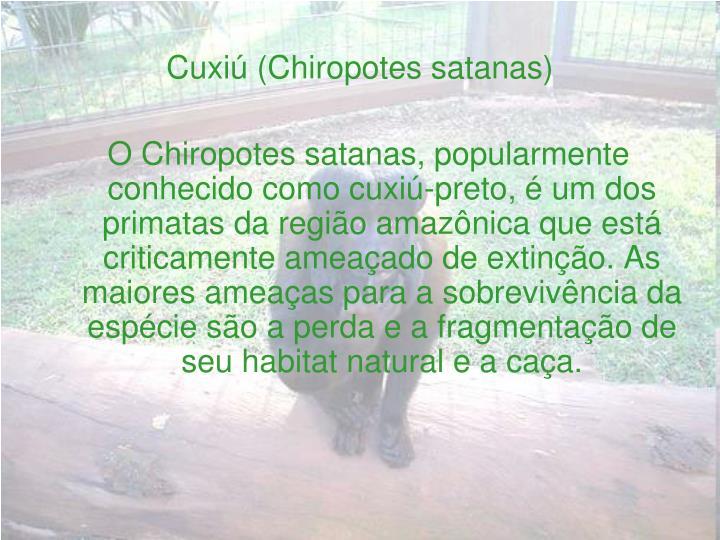 Cuxiú (Chiropotes satanas)