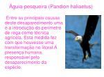 guia pesqueira pandion haliaetus