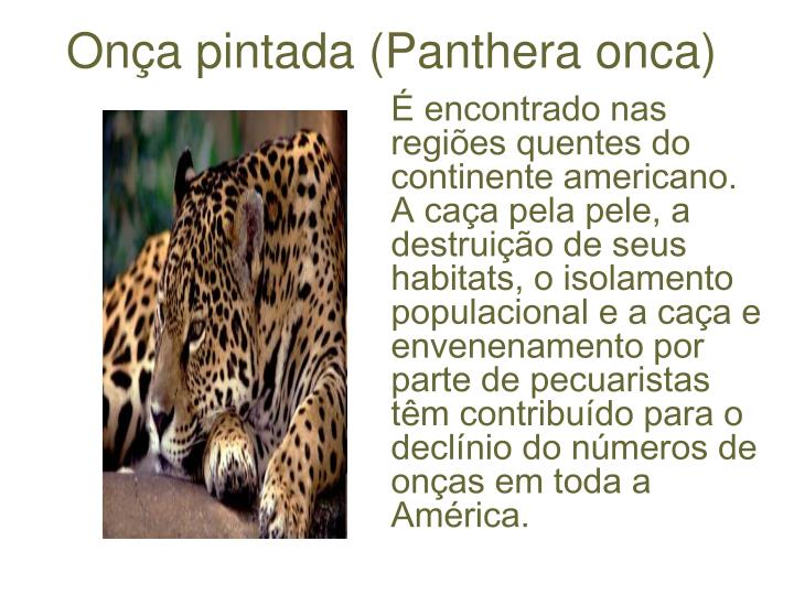 Onça pintada (Panthera onca)